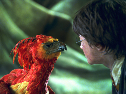 Phoenix harry potter